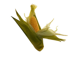 Seasonal Produce: Corn