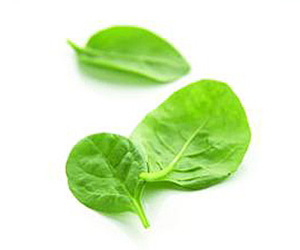 Seasonal Produce: Spinach