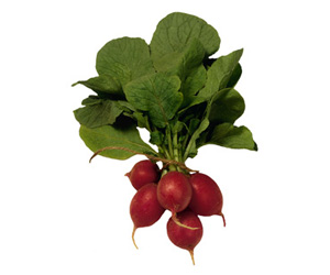 Seasonal Produce: Radishes